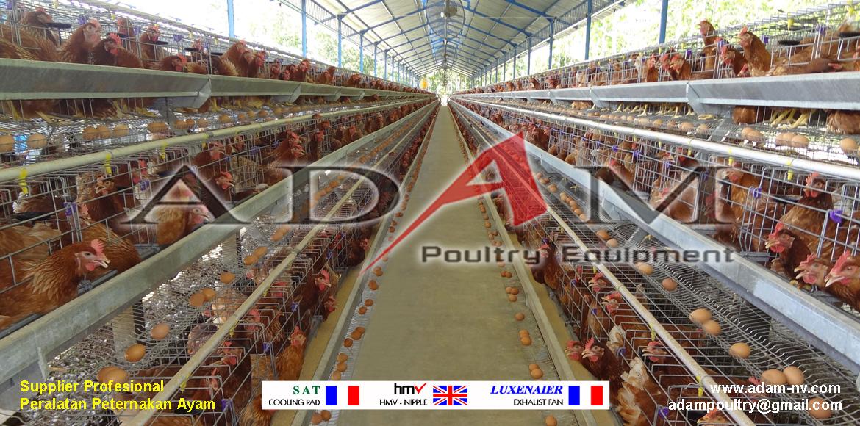 Pengerjaan Kandang Ayam Petelur Banyu Wangi 4