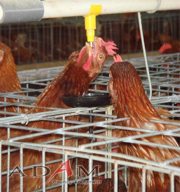 Adam Poultry - Nipple V3M22BDripCupBat in action